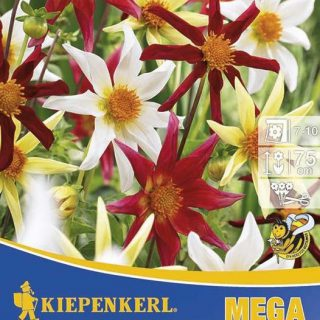 Dahlie Honka Mix Mega Pack