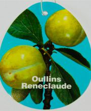 Pflaume Oullins Reneclaude